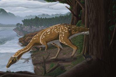 Illustration: elaphrosaur