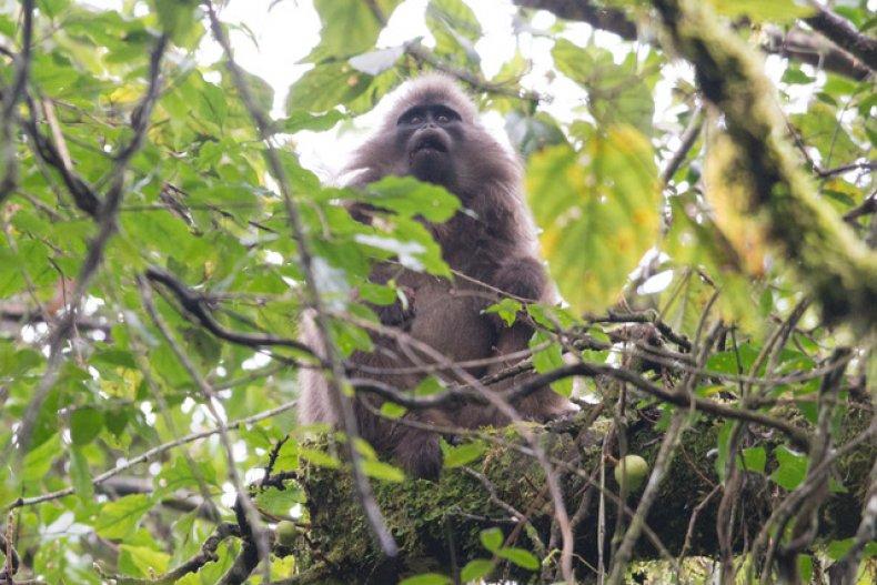 Primates, Wildlife, World, Nature, Animals