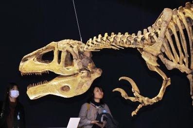 Megaraptor skeleton