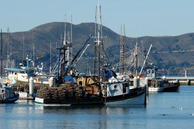 Fishing, San Fransisco
