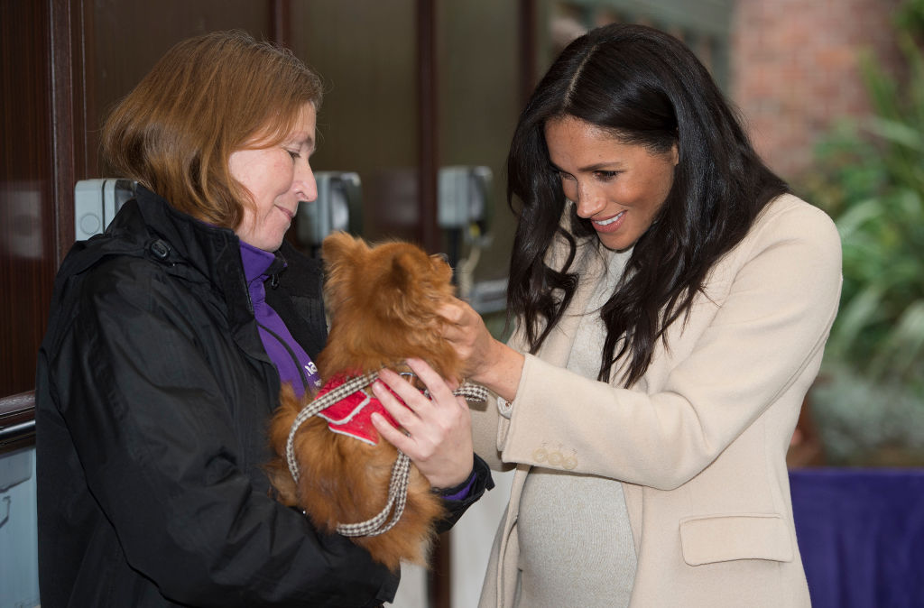 Exclusive: Meghan Markle's Secret Help For Animal Charity in Funding Crisis