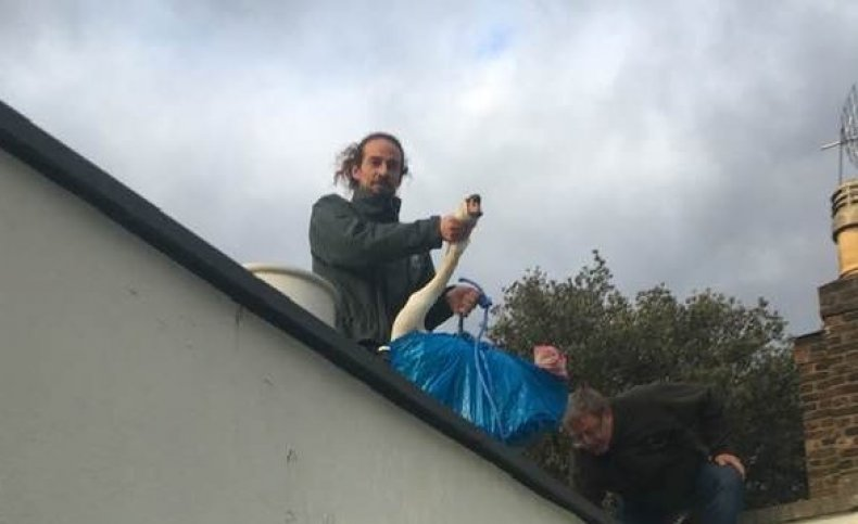 Swan found stuck on roof