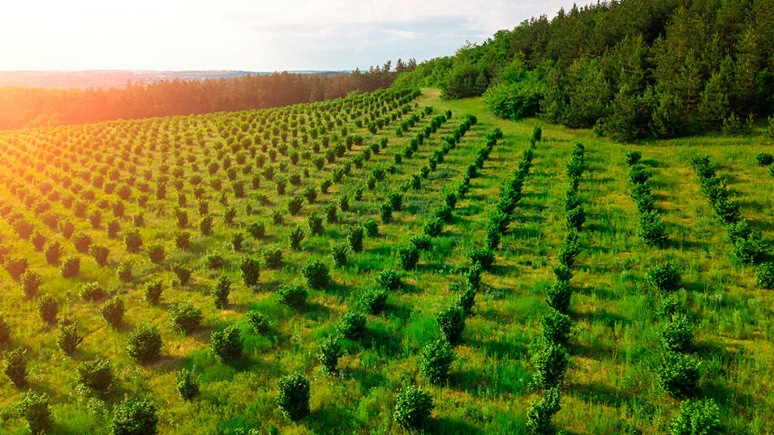 Newsweek AMPLIFY - FarmTogether's Innovative Platform