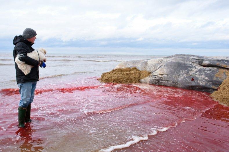 sperm-whale-carcass