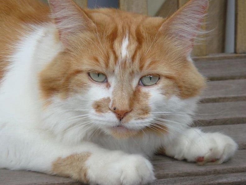 Rubble Cat
