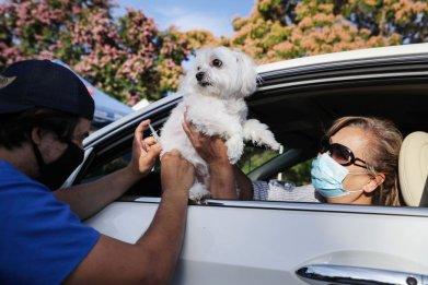Dog vaccinated at pet drive-through California