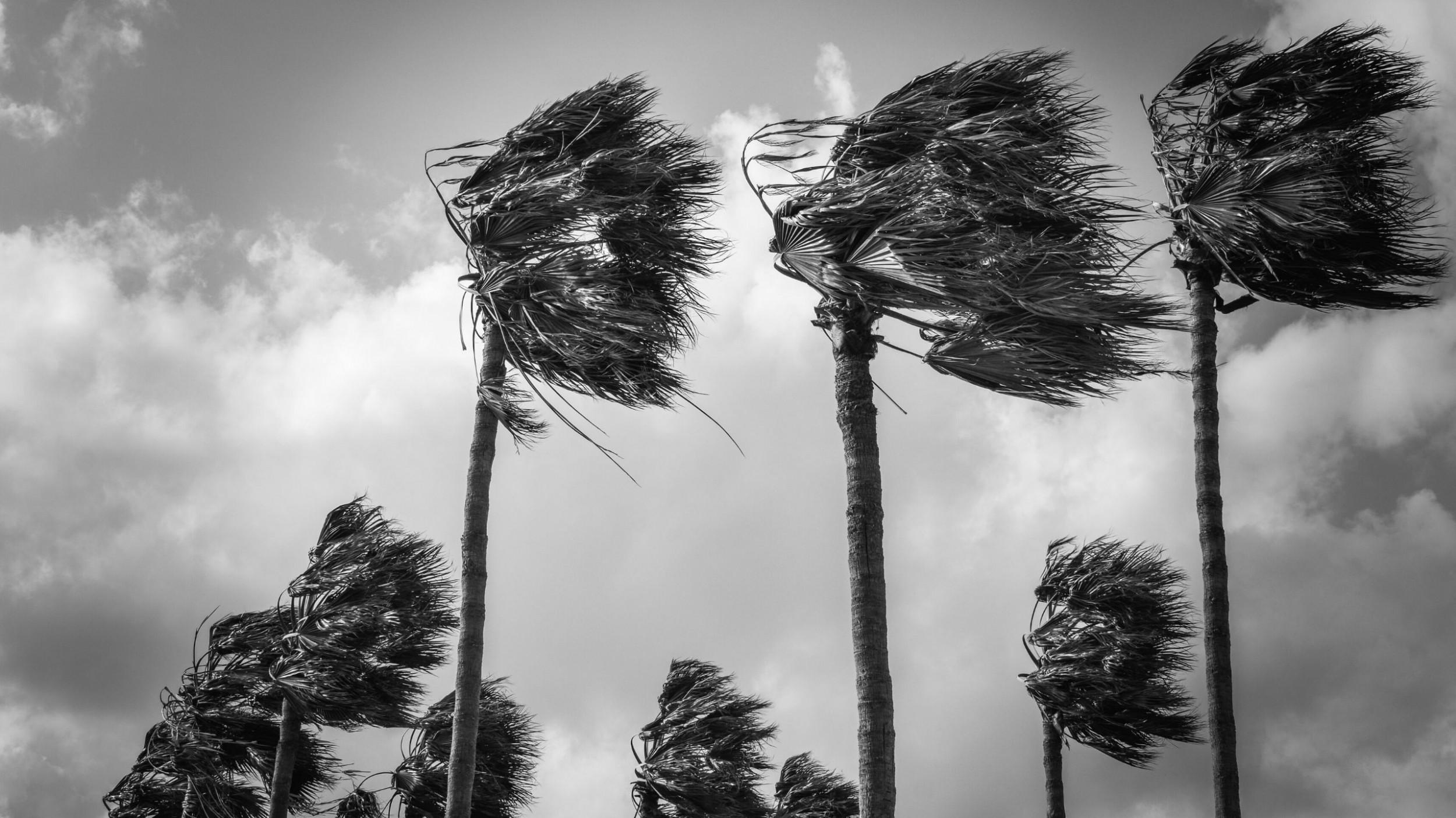 Newsweek AMPLIFY How to Prepare Hurricane Season