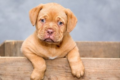Newsweek AMPLIFY A Guide For New Dogs