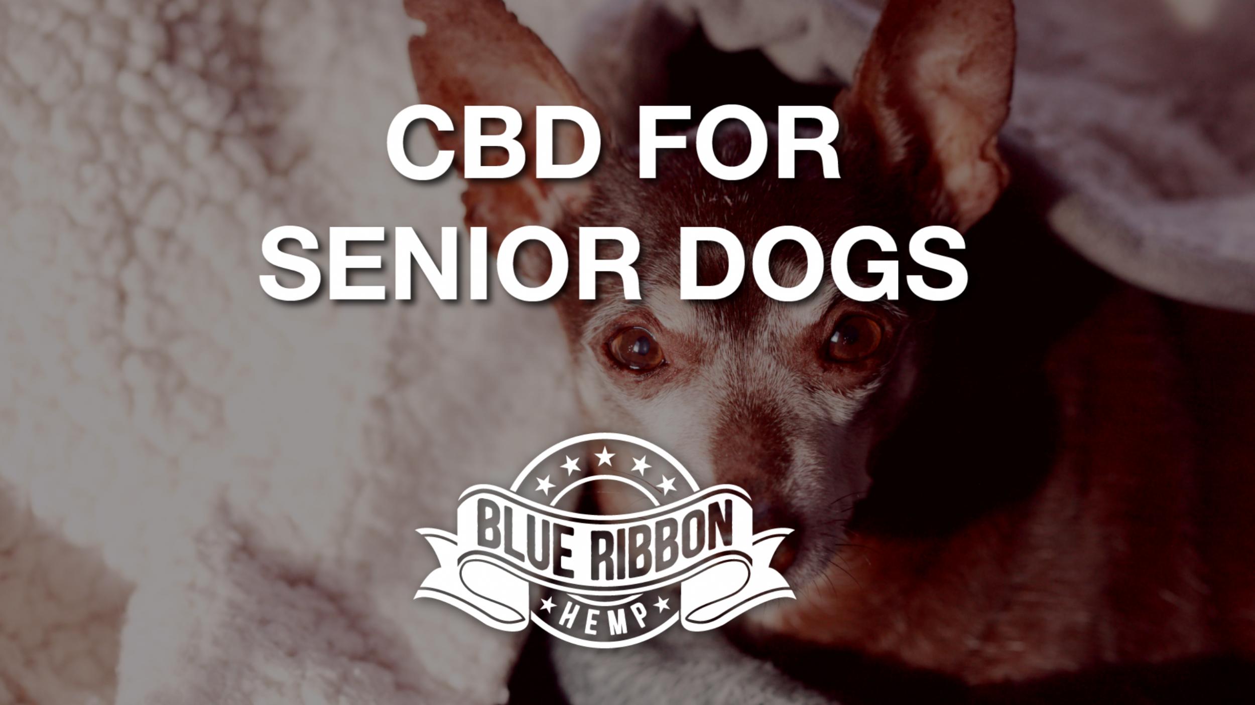 Newsweek AMPLIFY - CBD for Senior Canines