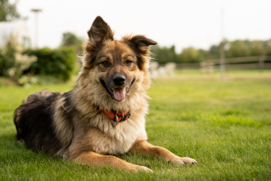 Newsweek Amplify - Dog Chewing Problem