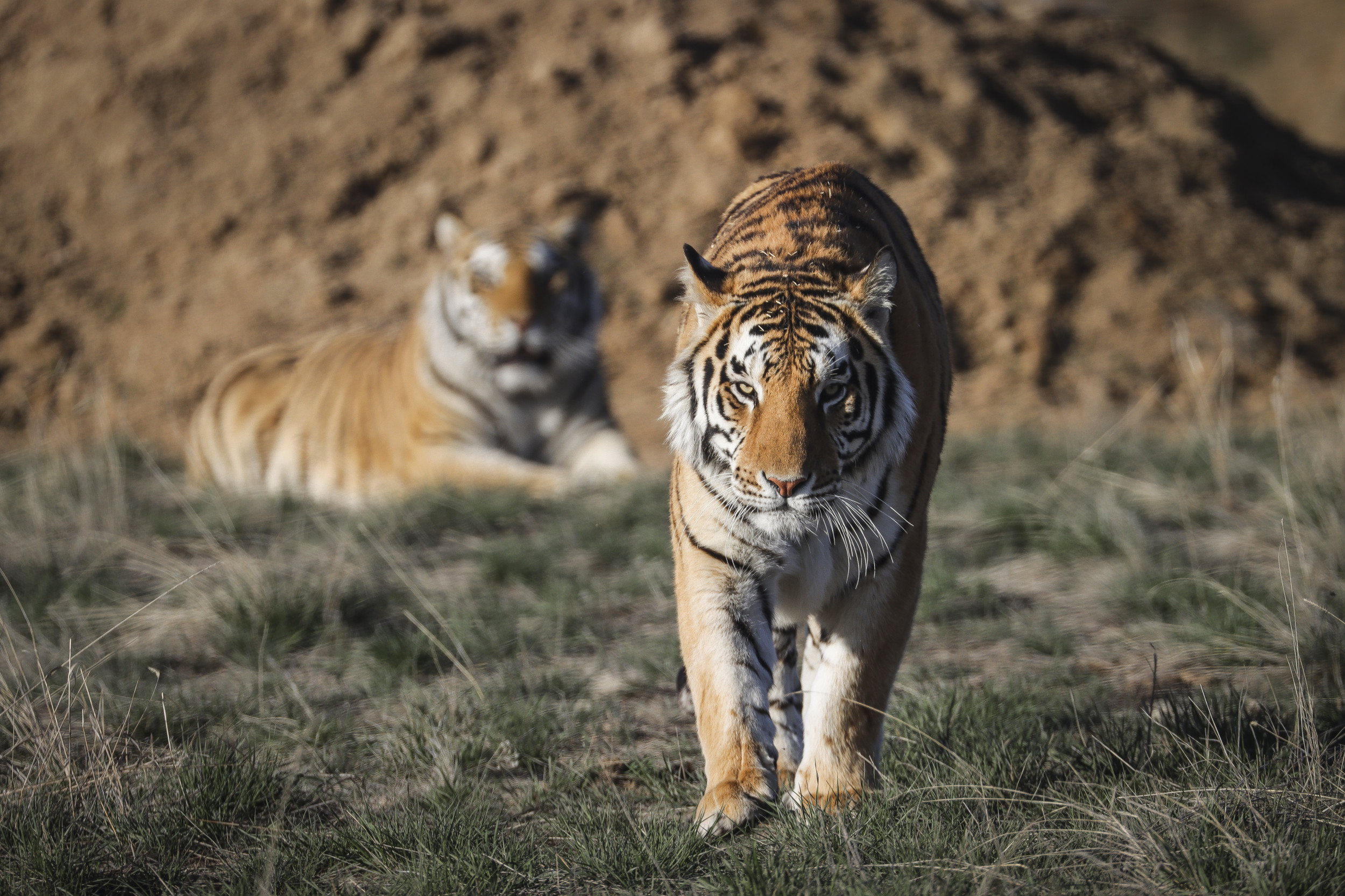 'Tiger King' zoo raided by investigators in search of human remains