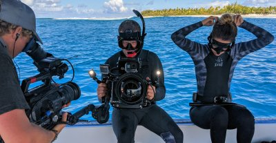 Tiger sharks, sharks, oceans