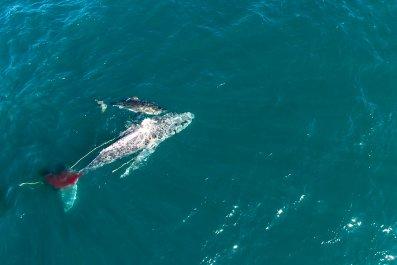 shark vs whale