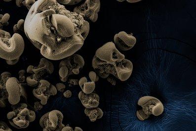bacteria, manganese oxide