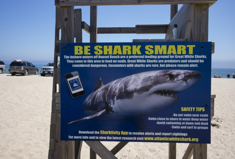 Sharks in Cape Cod