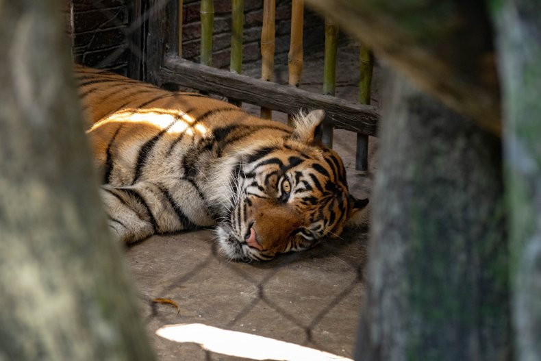 Tiger King zoo animal abuse USDA investigation