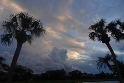 Palm Trees with Stormy Weather