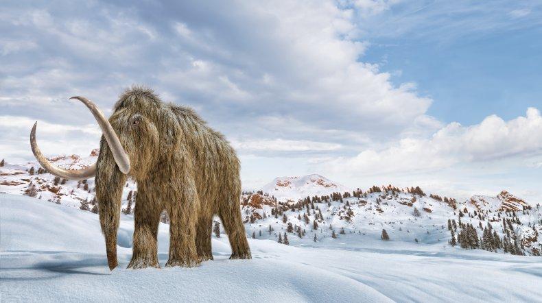 woolly mammoth