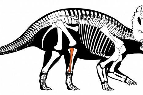 cancer, dinosaur, Centrosaurus