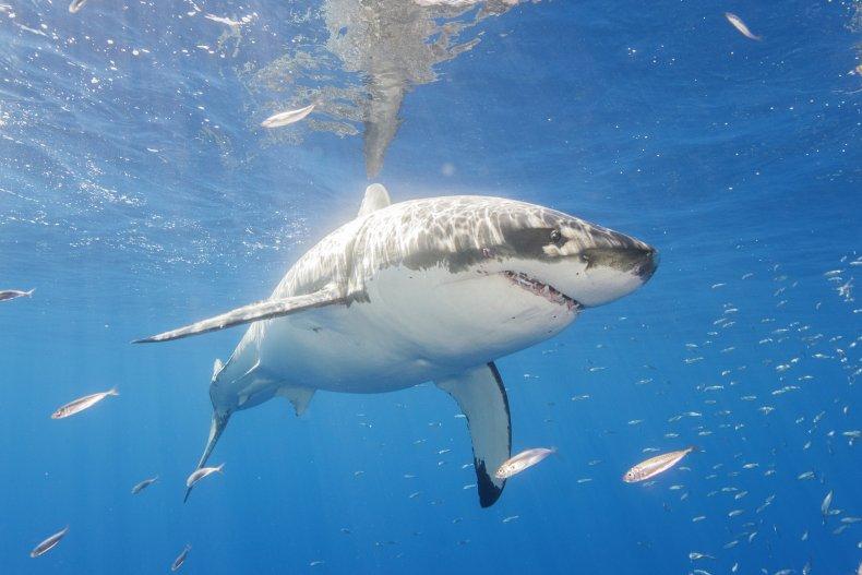How Many Shark Attacks in 2020?