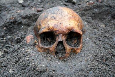 human skull remains