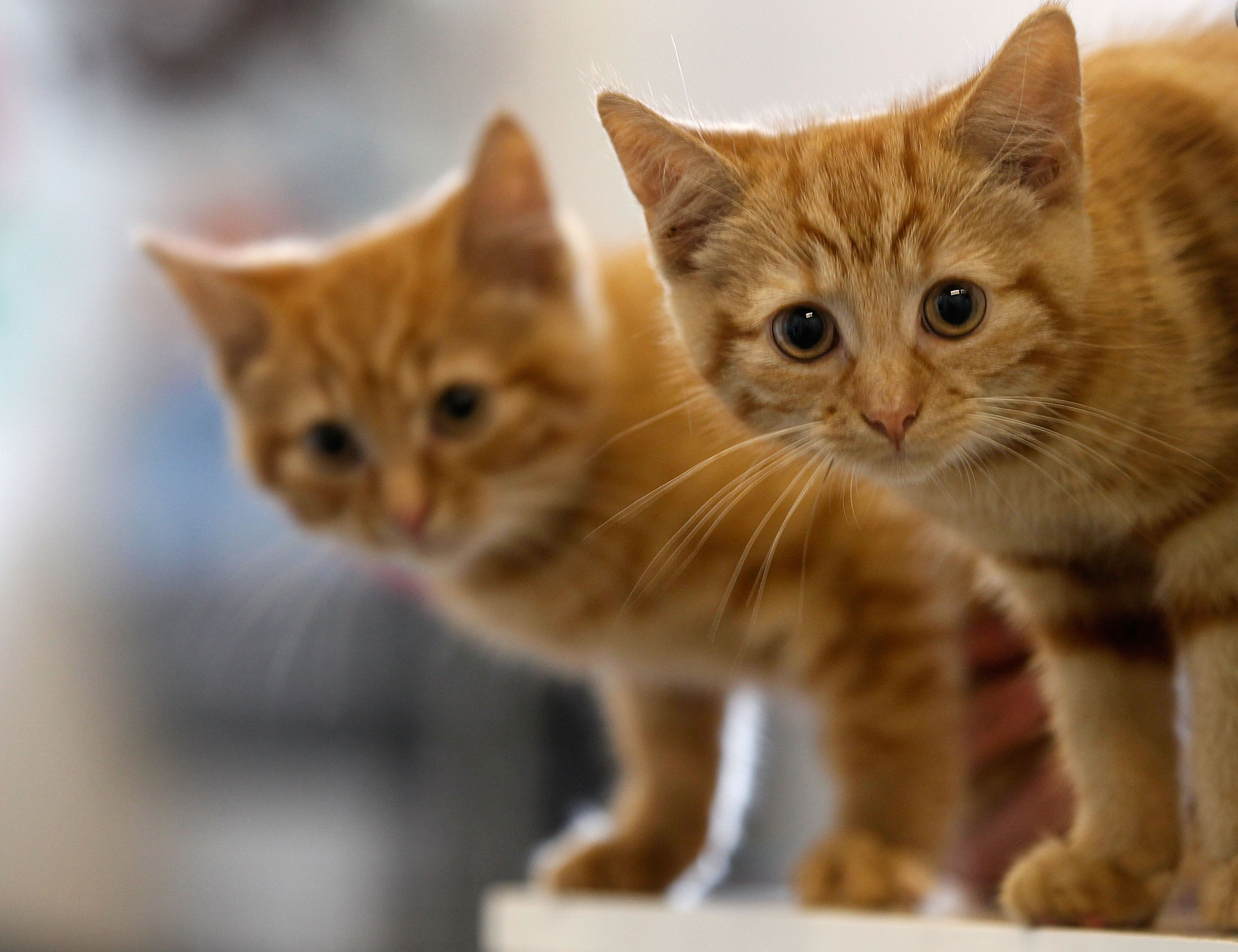 19 evicted cats in need of homes in Tucson   Local news
