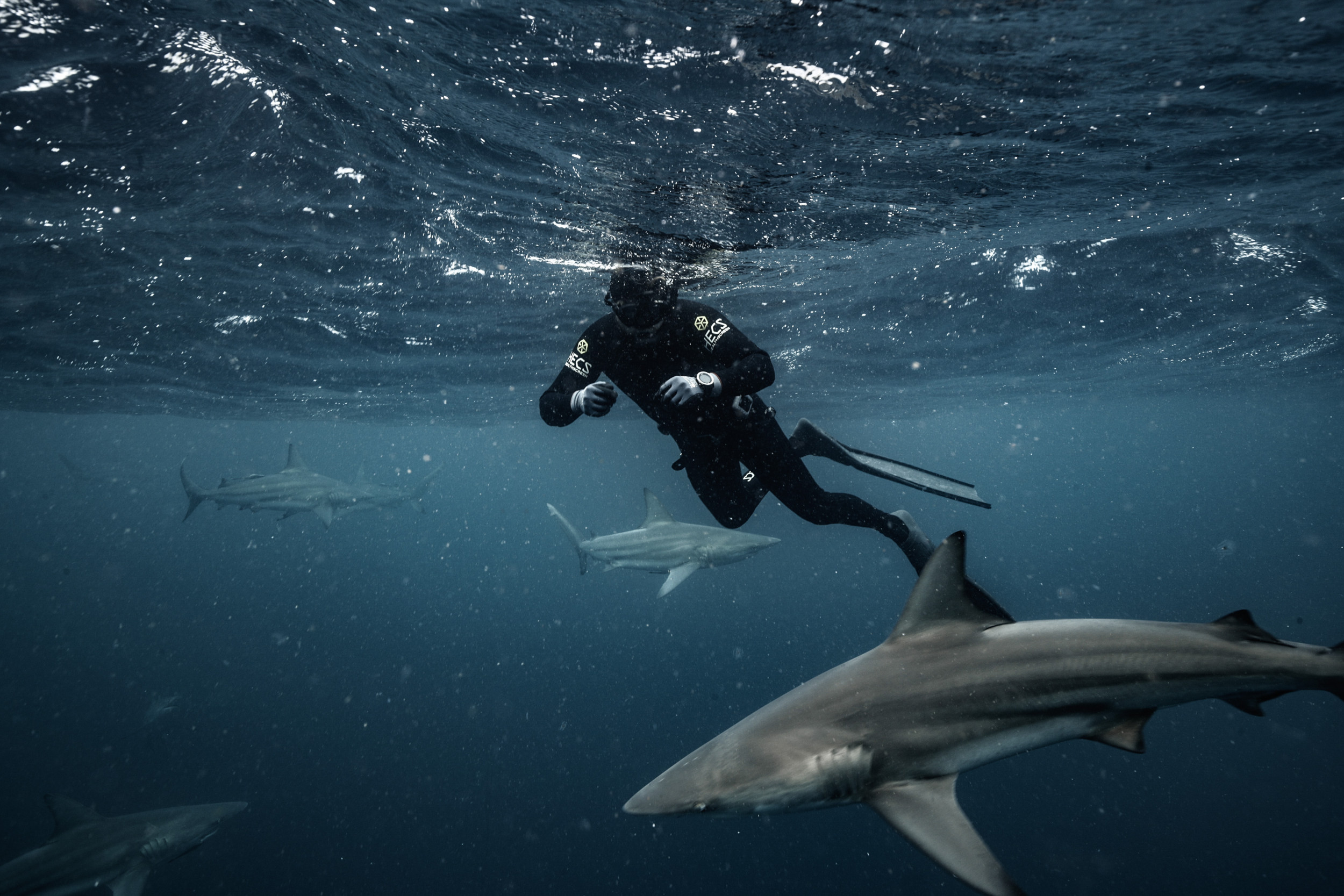 Shark not seen for over 100 years rediscovered in 'Land of the Lost'