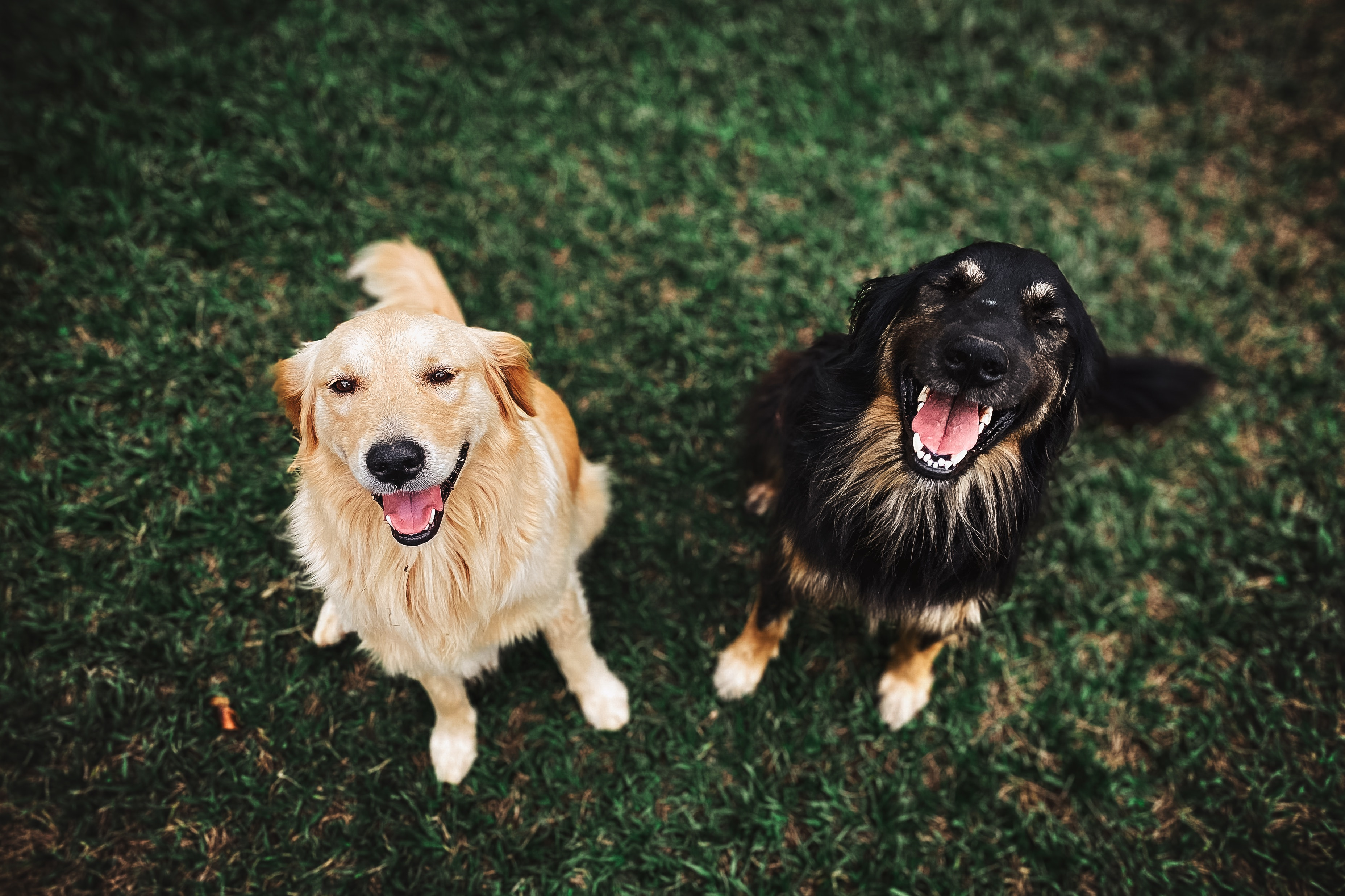 Two dogs smiling