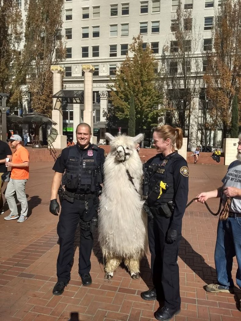Portland, protests, llama, Black Lives Matter