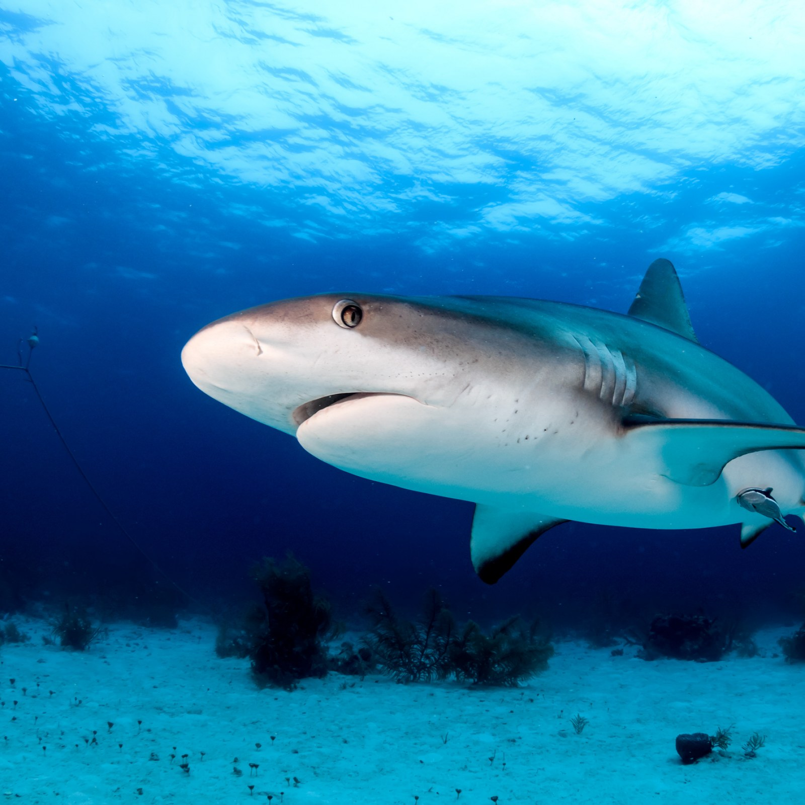 Gruesome Shark Feeding Video Suggests They Prefer Fish to Human Blood