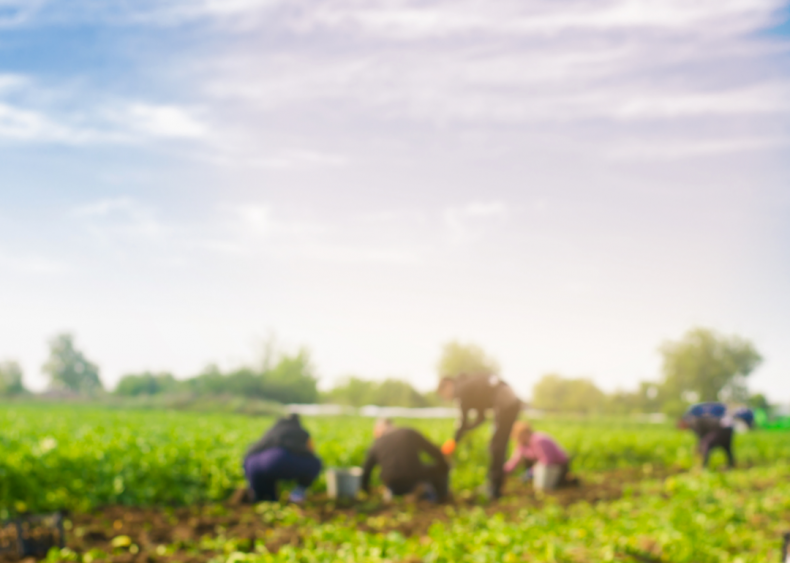 #3. Farm labor contractors