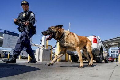 K9 Agent and Dog