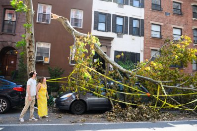 Tropical Storm Isaias Tree NYC