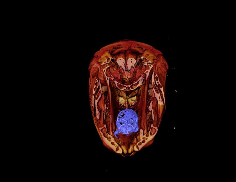 isopod parasite