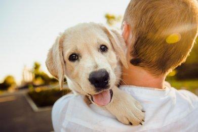 Newsweek AMPLIFY Tips Bringing Home New Dog