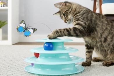 Newsweek AMPLIFY - Interactive Toys Cat