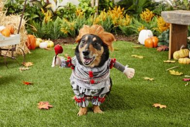 Newsweek AMPLIFY - 15 Best Dog Halloween