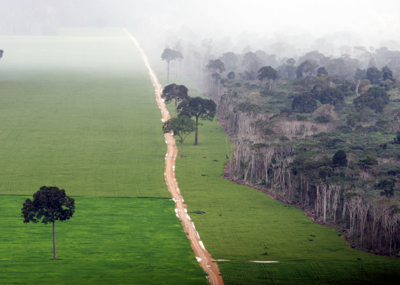 Food production is destroying rainforests