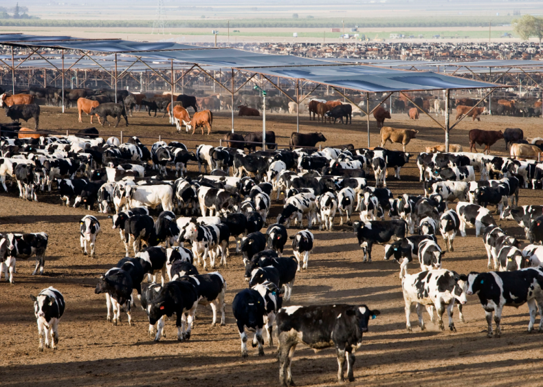 Biodiversity is suffering because cows need so much land
