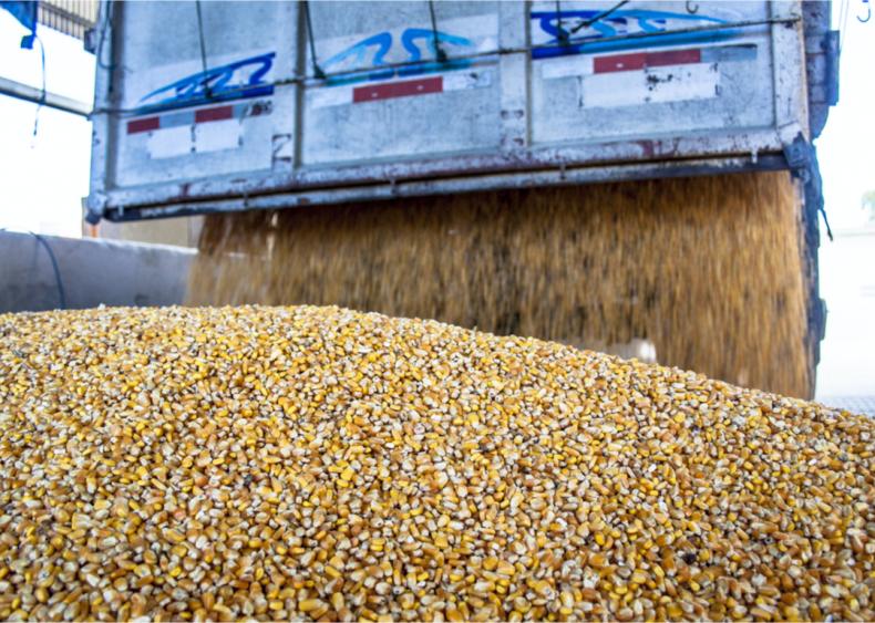 Producing animal feed has big impacts