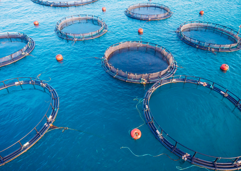 Aquaculture can feed demand in beneficial ways