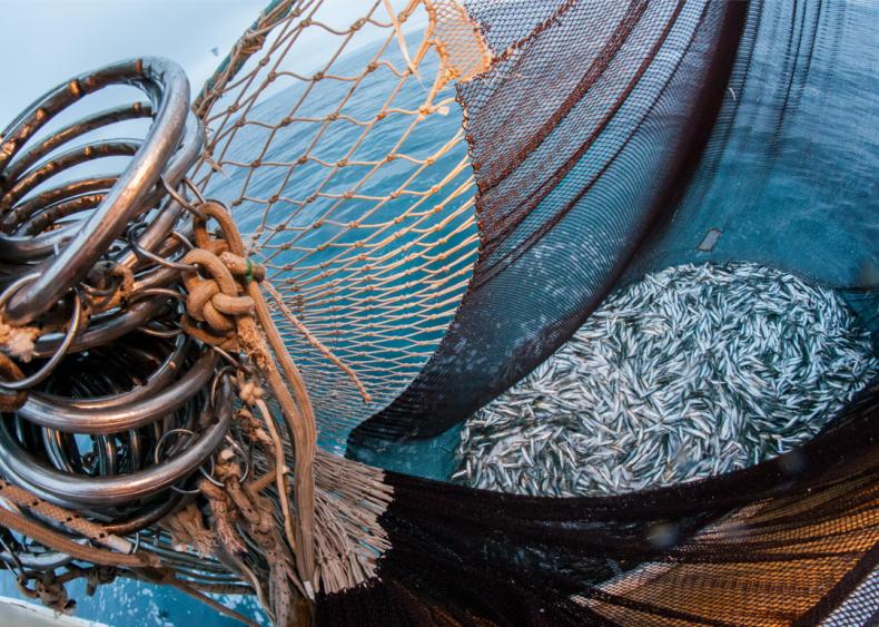 Poorly handled aquaculture can be detrimental