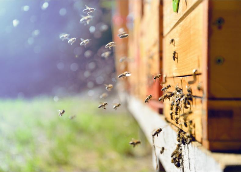 Food production is threatening necessary pollinators
