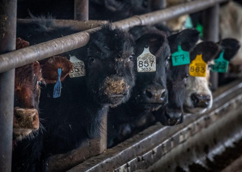 Beef is big contributor to global warming