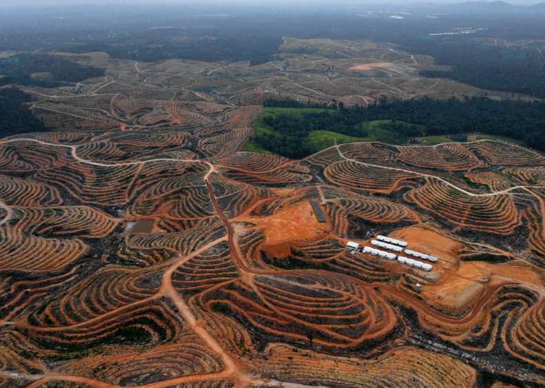 Devastation is tied to palm oil