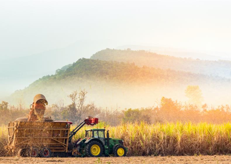 Growing sugarcane creates many problems