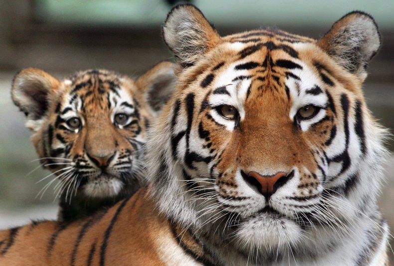 Jeff Lowe Tiger King FDA lisence suspended