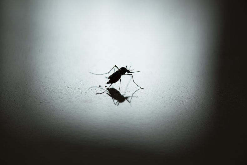 mosquito, stock, getty