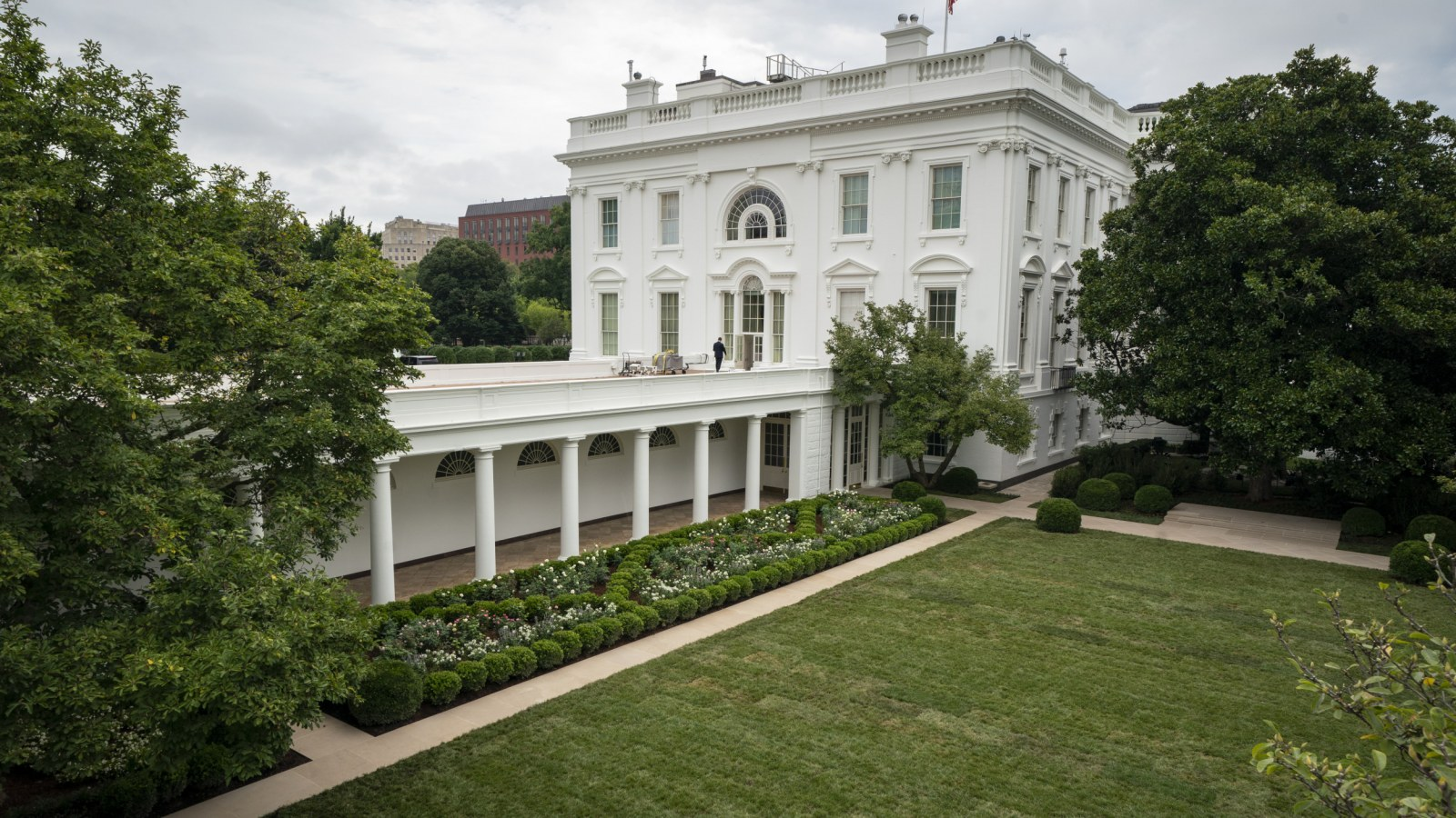 Rose Garden S Crab Apple Trees Will Reportedly Be Planted Elsewhere After Melania Trump S Renovation