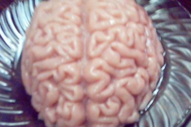 Newsweek AMPLIFY-  How Does The Brain Work